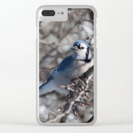 Winter blue jay in the sun Clear iPhone Case