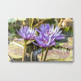 Lavender Lilies Metal Print