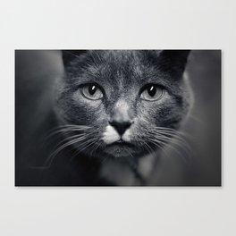 Les Yeux du Chat Canvas Print