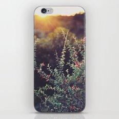 Sunlit iPhone & iPod Skin