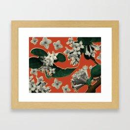 Invasive Species Series: Autumn Olive, No. 2 Framed Art Print