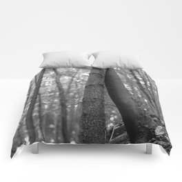 Old love, black and white photography trees Comforters