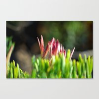 plant Canvas Prints featuring plant by  Agostino Lo Coco