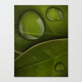 dew drops on green leaves Canvas Print