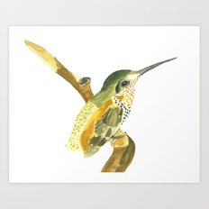 Golden Beauty Hummingbird Art Print