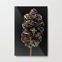 Great Burnet Metal Print