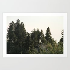 Foliage 2 Art Print