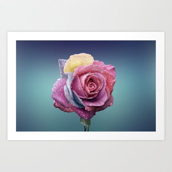 rose flower beauty 4 Art Print