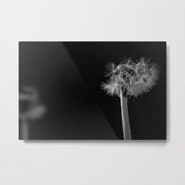Dandelion in the dark Metal Print