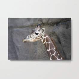 Philadelphia Zoo Series 21 Metal Print