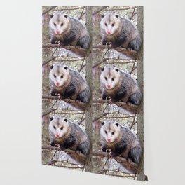 Possum Staredown Wallpaper