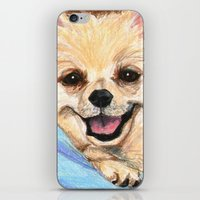 preppy iPhone & iPod Skins featuring Preppy Pomeranian by Britanee LeeAnn Sickles