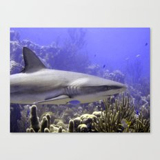 Shark Swimming Past Canvas Print