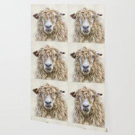 Longwool Sheep Wallpaper