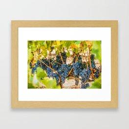 Ripe Grapes on Vine Framed Art Print