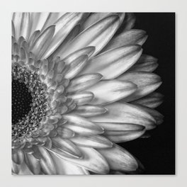 Black And White Print of Gerber Daisy Canvas Print