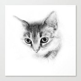 Tiger Cat Take Two  Canvas Print