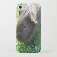 guinea pig iPhone & iPod Cases featuring Guinea Pig by Rose&BumbleBee
