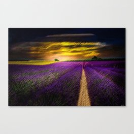 Sunset over Lavender Fields Landscape Painting by Jeanpaul Ferro Canvas Print