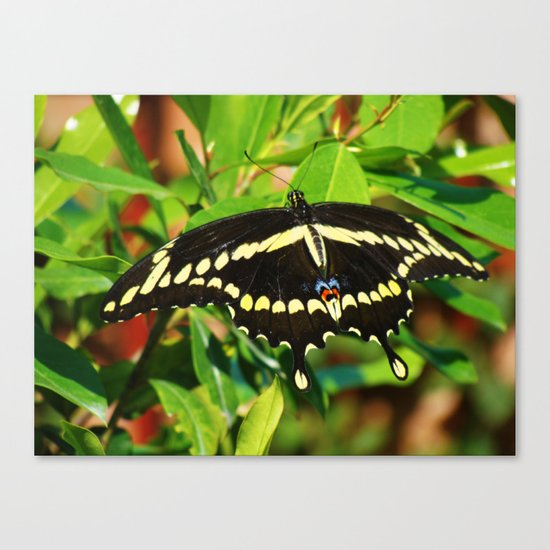 A Pretty Butterfly Canvas Print