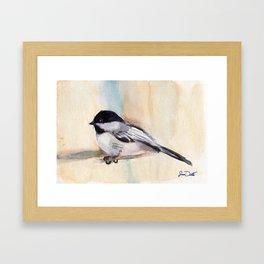 Chickadee Study Framed Art Print