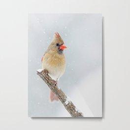 Female Northern Cardinal Metal Print