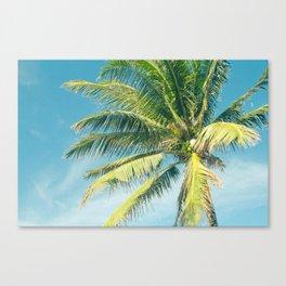 Hookipa Palm Dreams Canvas Print