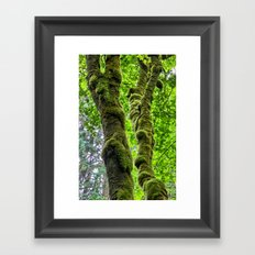 Moss-Covered-Maple Framed Art Print