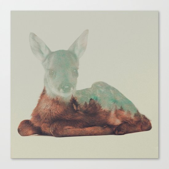 Resting Fawn Canvas Print