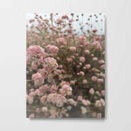 Pink and Cream Wildflowers Metal Print