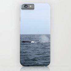 Whales iPhone 6s Slim Case