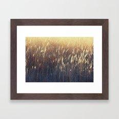 Amber Waves No. 2 Framed Art Print