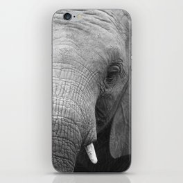 Kavala Orphan Collection (2 - 10) iPhone Skin