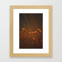 Hawkweed Framed Art Print
