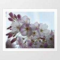 Backlit Blossoms Art Print
