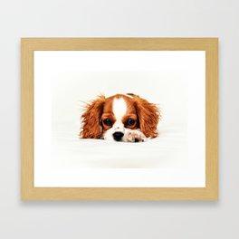 Cavalier King Charles Framed Art Print