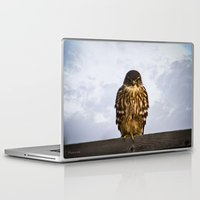 merlin Laptop & iPad Skins featuring Merlin Falcon by Photography By MsJudi