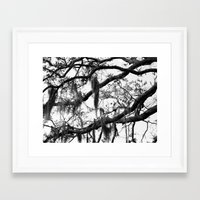 spanish Framed Art Prints featuring Spanish Moss by MorganLoriPhoto
