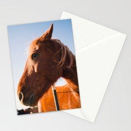 Horse. Palo Duro Canyon, Texas. Stationery Cards