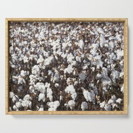 Cotton field in rural Tunica County Mississippi Serving Tray