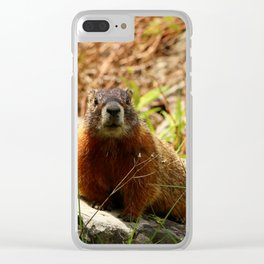 Marmot On A Rock Clear iPhone Case