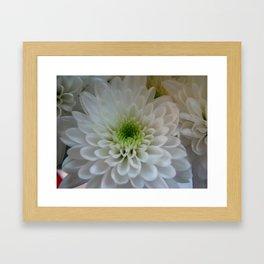 Macro Chrysanthemum Framed Art Print