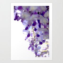 wisteria Art Print