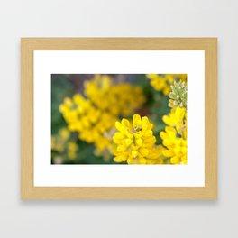 Yellow Lupin and a Ladybug Framed Art Print
