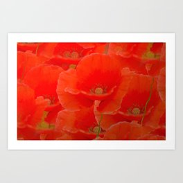 Red Poppies  Art Print