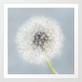 Dandelion on Blue Art Print
