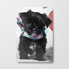Black and White Mixed Breed Puppy Wearing a Valentine's Day Hearts Scarf Metal Print