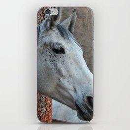 Grey Horse iPhone Skin
