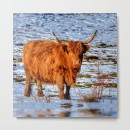 Hamish the Scottish Highland Bull in Winter Snow Metal Print