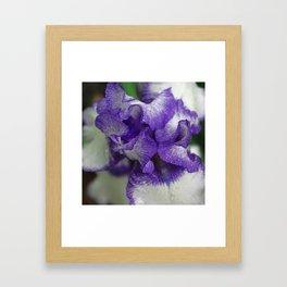 Violet and white swirls - Iris flower Framed Art Print